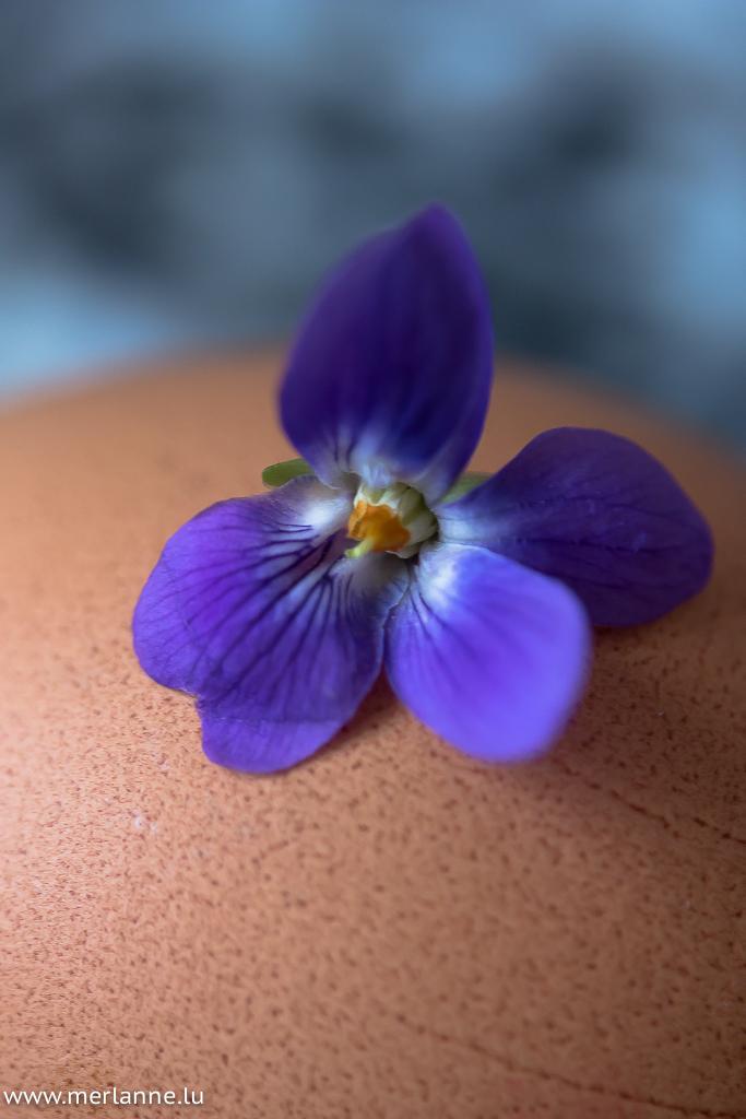 violette sur oeuf